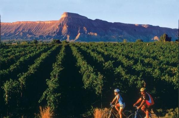 Agritourism Link