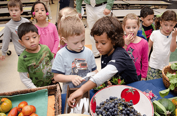 Farm to School Link
